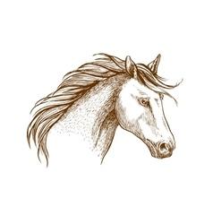 Horse sketch icon of arabian stallion vector image