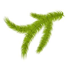 Pine tree branch icon isometric style vector