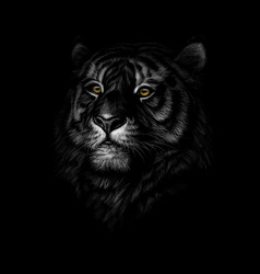Portrait of a tiger head on a black background vector