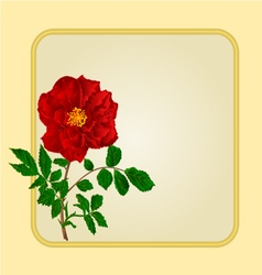 Golden frame with red rose greeting card vector image vector image