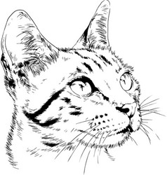 pedigree cat drawn in ink hand vector image