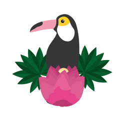 toucan exotic flower tropical summer vector image