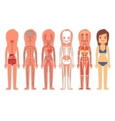 Medical woman body anatomy vector image vector image
