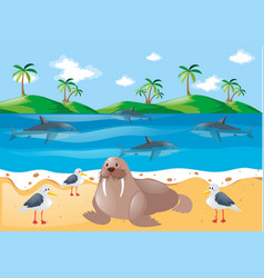Sea animals and pigeons on the beach vector