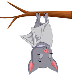 cute bat cartoon sleeping vector image vector image
