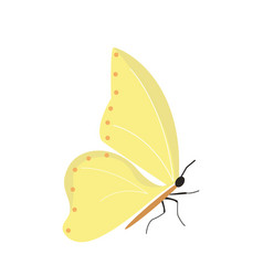 butterfly on white background for graphic and web vector image