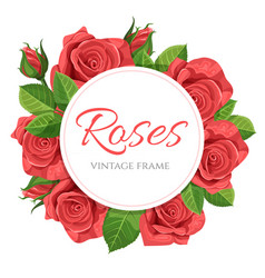 red rose round frame vector image