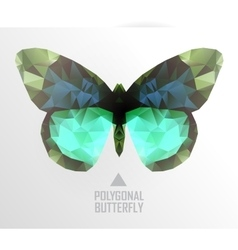 Color butterfly flying vector image
