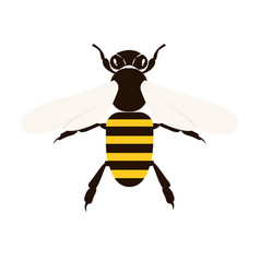 bee on white background for graphic and web design vector image
