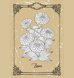 black and white drawing zinnia vector image