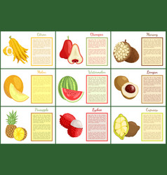 Citron and chompoo pineapple fruit posters vector