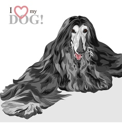 domestic dog black Afghan Hound breed vector image