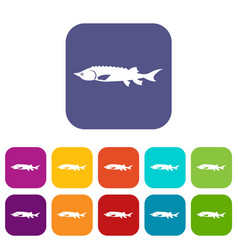 Fresh sturgeon fish icons set vector