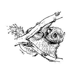 Hand drawn sketch of koala black on white vector