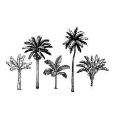 palm tree set vector image