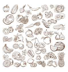hand drawn pictures of fruits and vector image