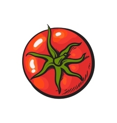 Sketch style drawing of shiny ripe red tomato top vector image vector image