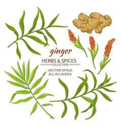 ginger elements set vector image