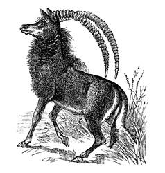 Sable antelope niger engraving vector image