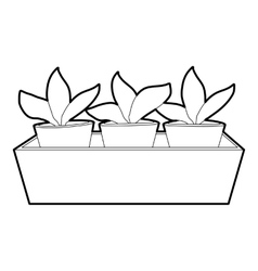 Young sprout seedlings in a flower box icon vector image