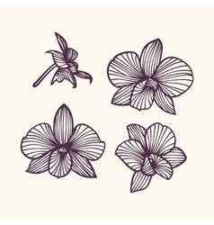 Stylized drawing orchids vector image vector image