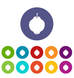 quince fruit set icons vector image vector image
