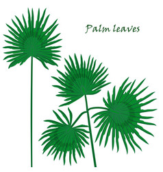 Set tropical palm leaves realistic drawing in vector