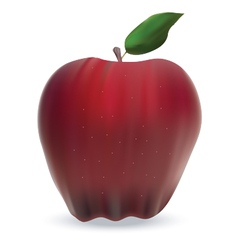 apple isolated on white vector image