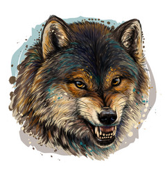 angry wolf sketchy color portrait a wolf vector image