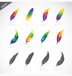 group of feathers icon design on white background vector image