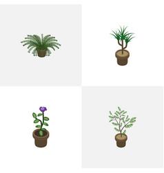 Isometric plant set of flower fern houseplant vector