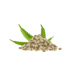 realistic hemp seeds with leaf vector image