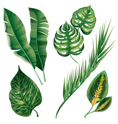 realistic tropical botanical foliage plants set vector image