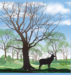 Spring landscape with wild animal elk forest vector