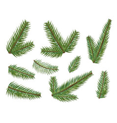 different christmas tree branches set christmas vector image vector image