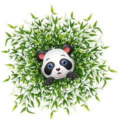 cute baby panda smiling with lots of bamboo leaf i vector image