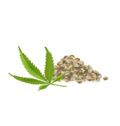 Realistic hemp seeds with leaf vector