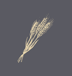The an ear wheat in vector
