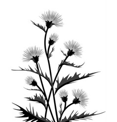 Thistle with leaves vector