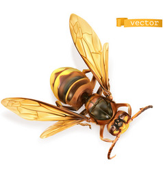 wasp bee hornet 3d realistic vector image
