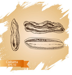 sketch - bakery ciabatta vector image vector image