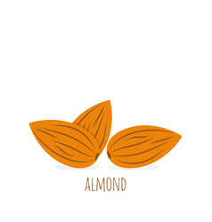 almond icon nut vector image