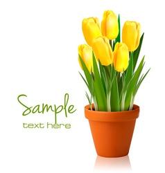Fresh spring yellow flowers vector