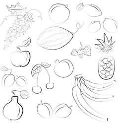 Hand drawn fruit sketch vector
