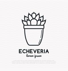 succulent echeveria in pot thin line icon vector image