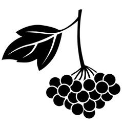 viburnum berries vector image