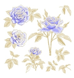 Blue roses set vector image vector image