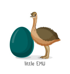 little emu bird isolated on white background vector image