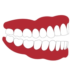 open mouth is not closed teeth vector image