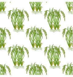 Seamless pattern with rice plant vector